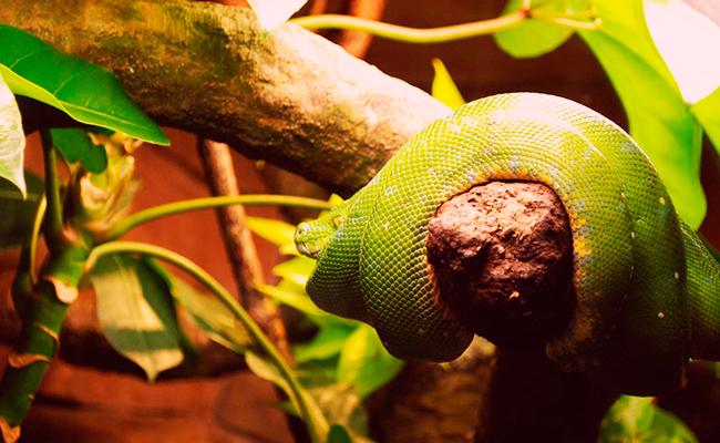 soñar con serpientes